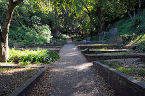 evergreen_scenic